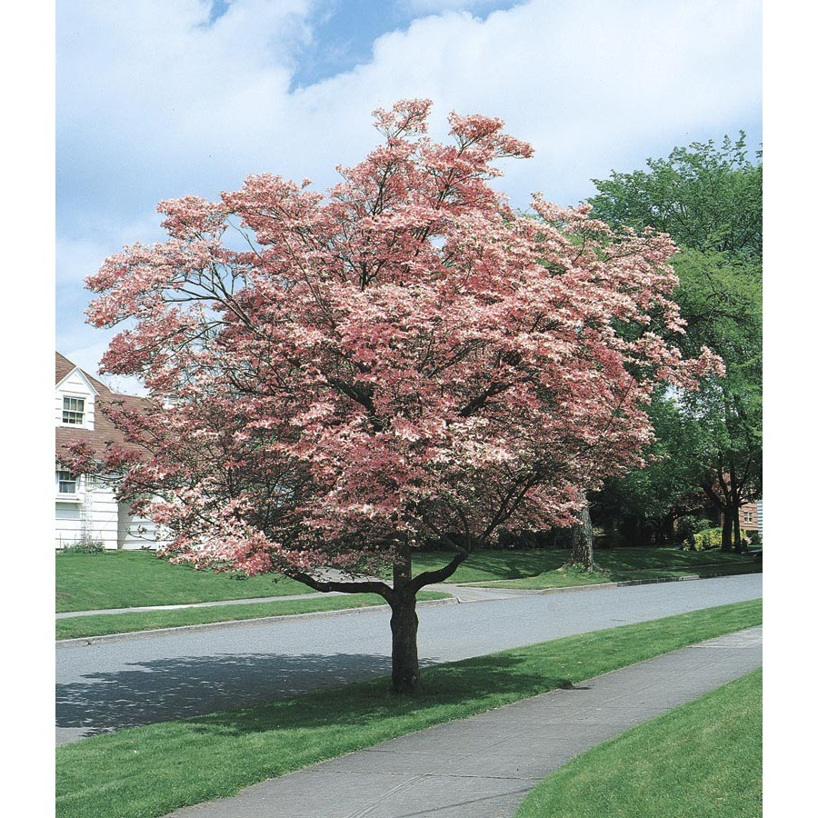 lowes garden center trees top home information