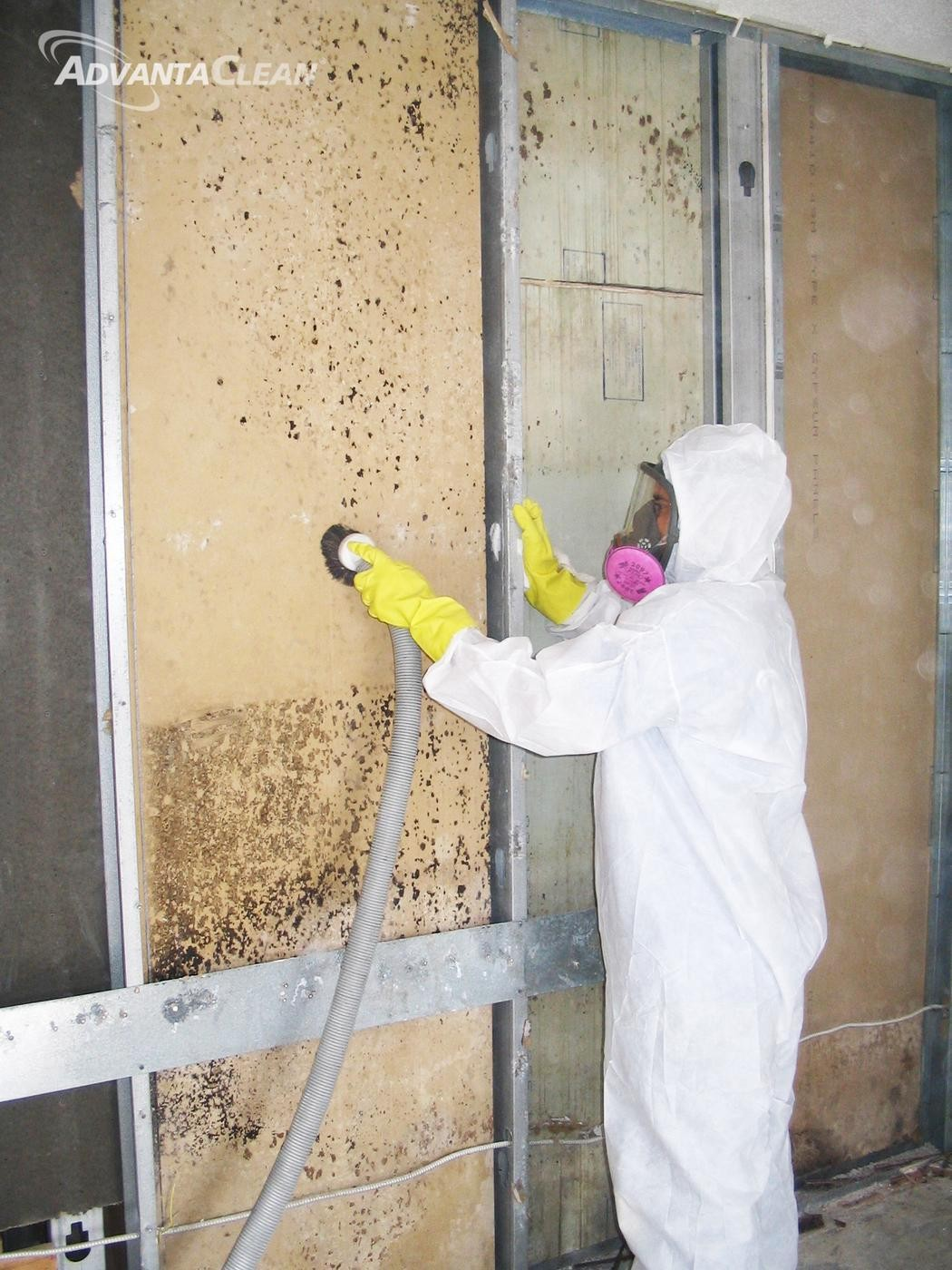 What Is Mold Remediation